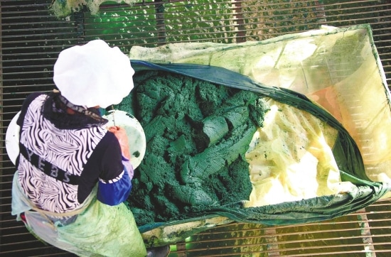 fabrication de spiruline