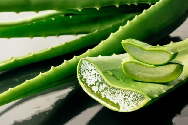 Aloe vera: Benefits, Properties, Uses and Indications - Natura Force