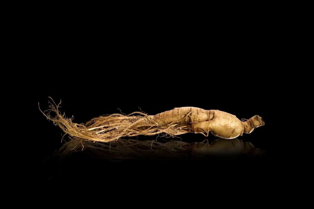 ginseng et fatigue