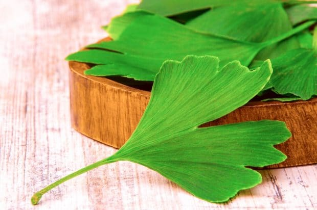 Bienfaits Ginkgo Biloba | Posologie - Exclusive